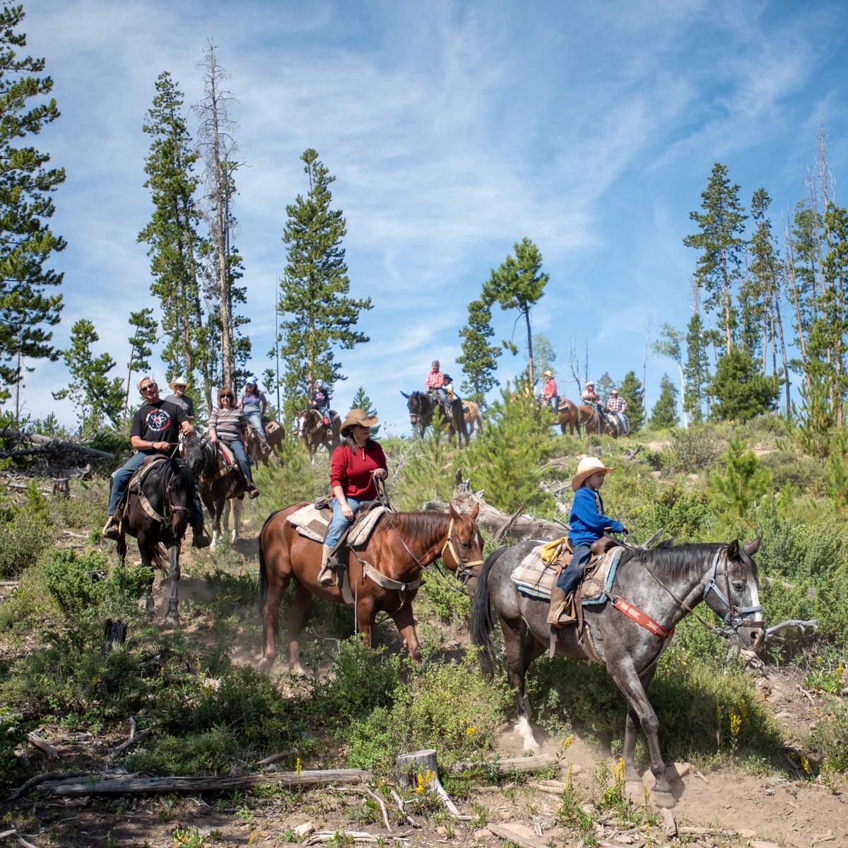 Horses on trail