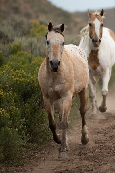 Horses running free at Drowsy Water Ranch