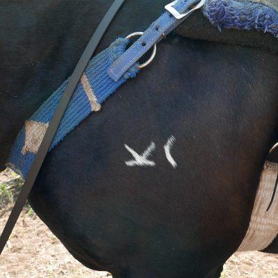 Saddle up at Drowsy Water Ranch