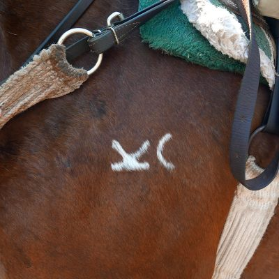 The horse brand of Drowsy Water Ranch