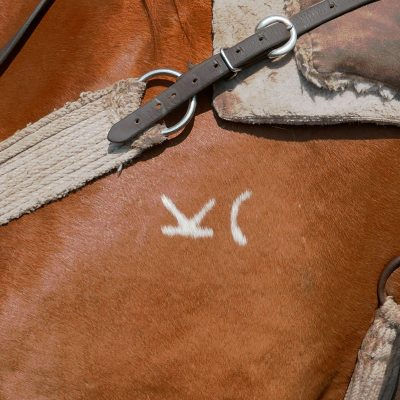 The brand on a horse